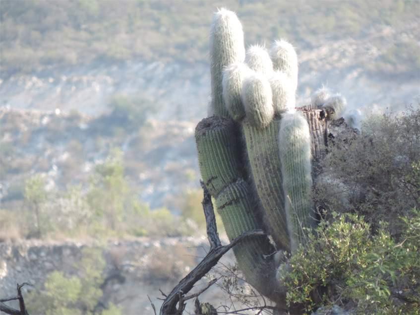 Őszapó Mexikóban