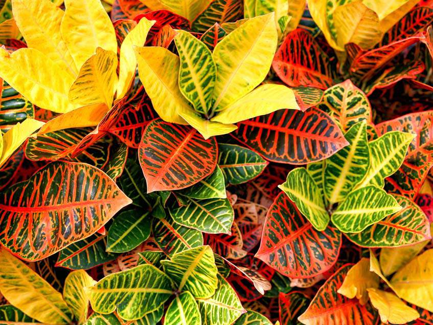 A flor rium n v nyei kertlap kert szeti magazin for Foto di ville colorate