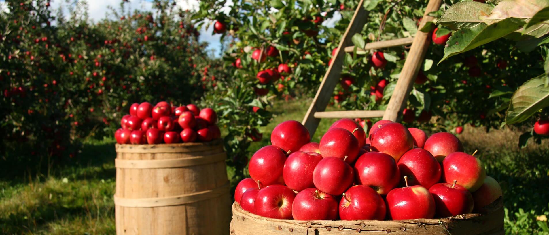 Gyümölcstermesztő Tanfolyam Kert Lap