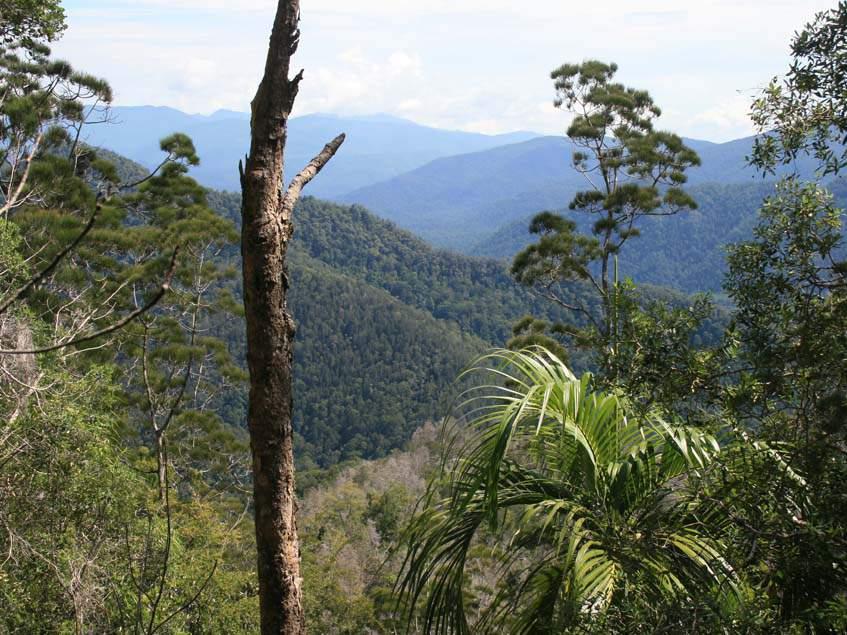 őserdő