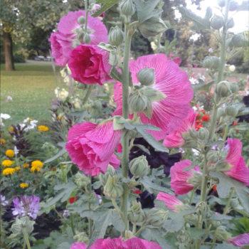 Július kertészeti teendői