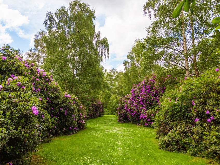 Kew Gardens rododendronvölgy