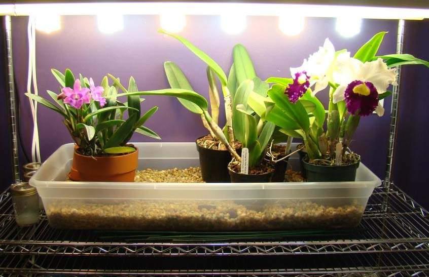 orchidea mesterséges megvilágítása LED virágzás serkentő lámpával