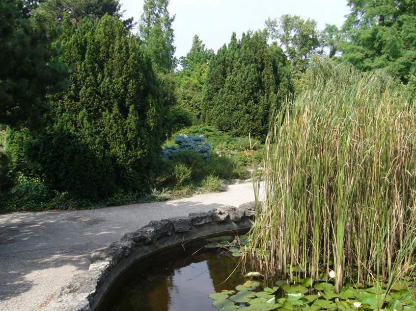 Margit szigeti tópart