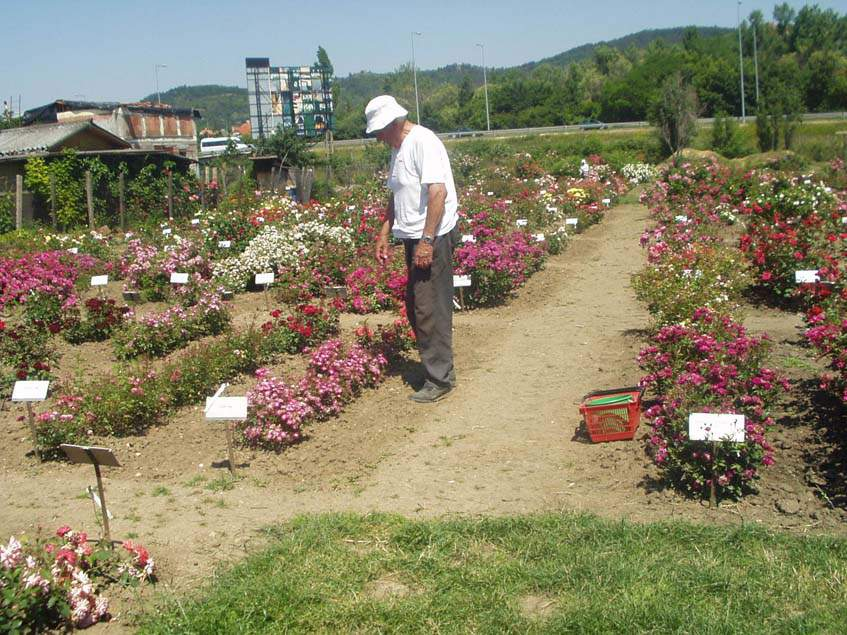 Márk Gergely rózsakertje