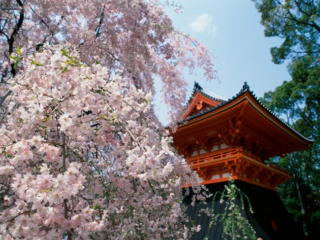 Ninnaji templom Kyoto
