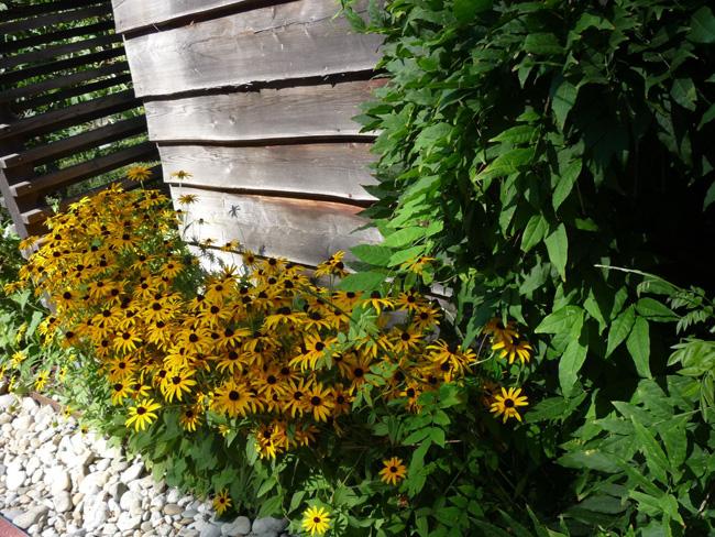 kúpvirágok kerítés tövében