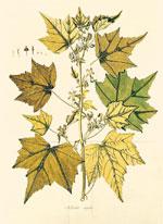 Plantarum Rariorum Hungariae