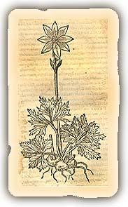 Stirpium nomenclator Pannonicus
