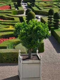 Clementin narancsfa, Villandry