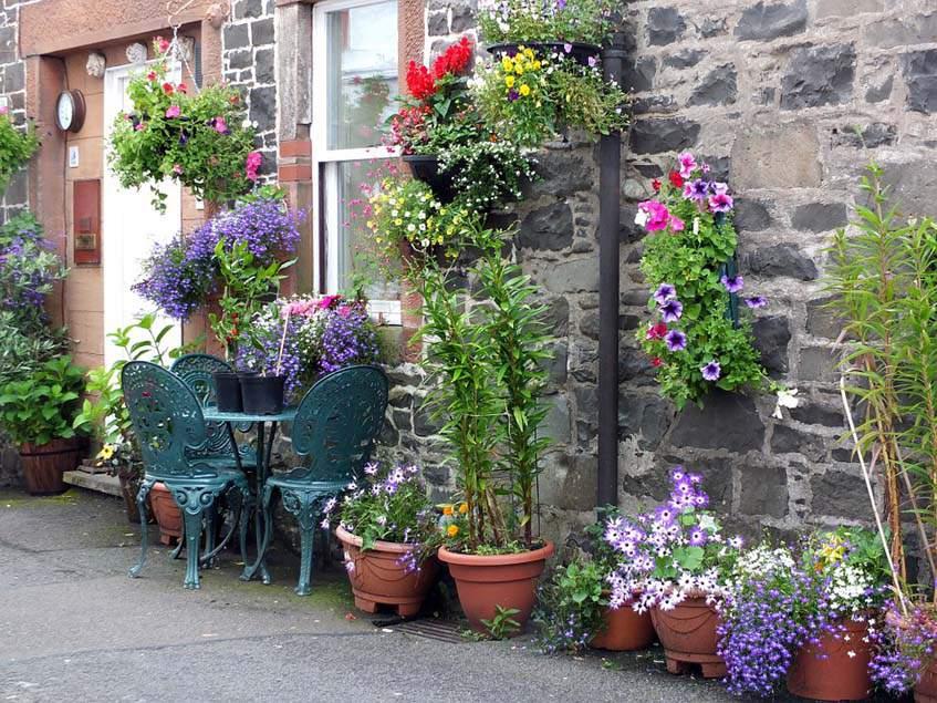 ablak köré helyezett cserepes virágok