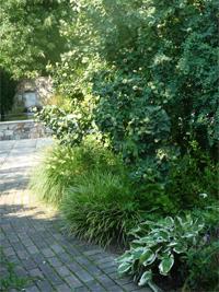 arnyékos kertrész