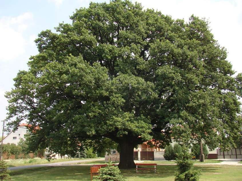 babóti királyfa