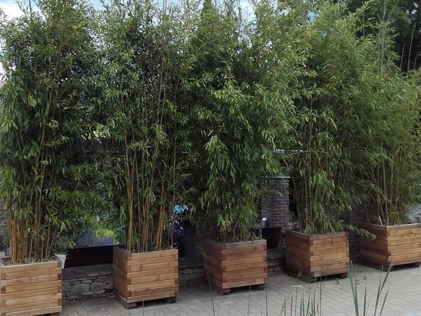 bambuszok konténerben