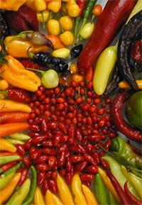 chili paprikák