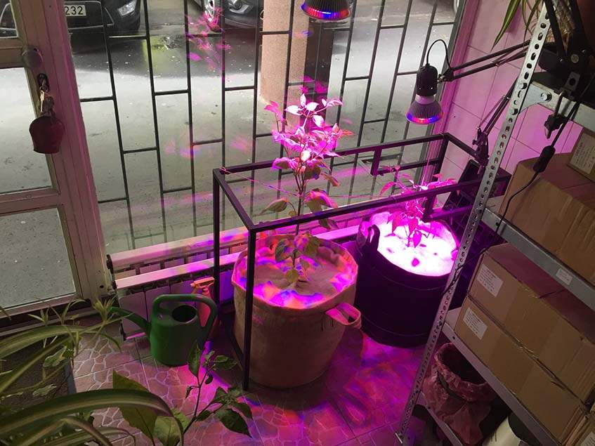 chili növénynevelő zsákban