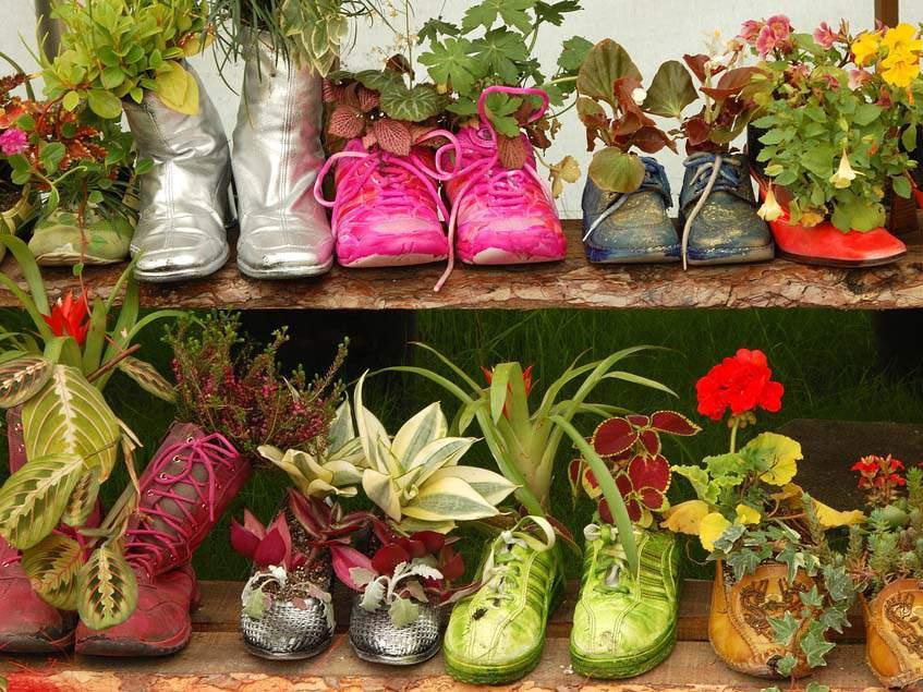 cipőbe ültetés