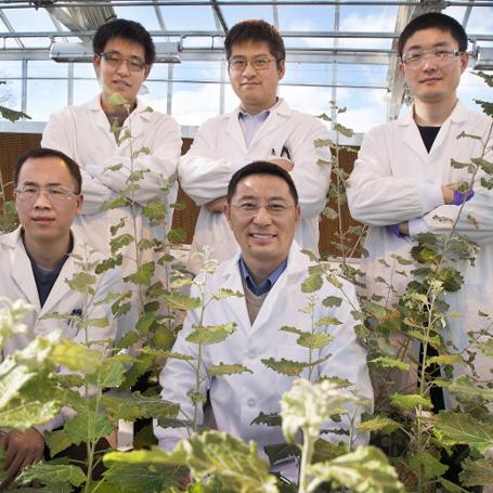 Chang-Jun Liu with Mingyue Gou, Huijun Yang, Yuanheng Cai és Xuebin Zhang