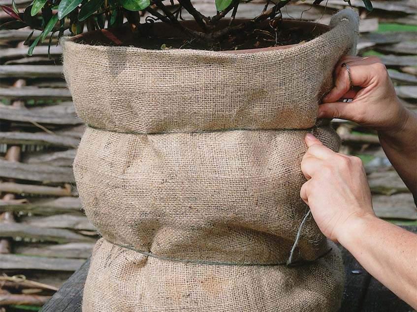 konténeres növényektéli védelme