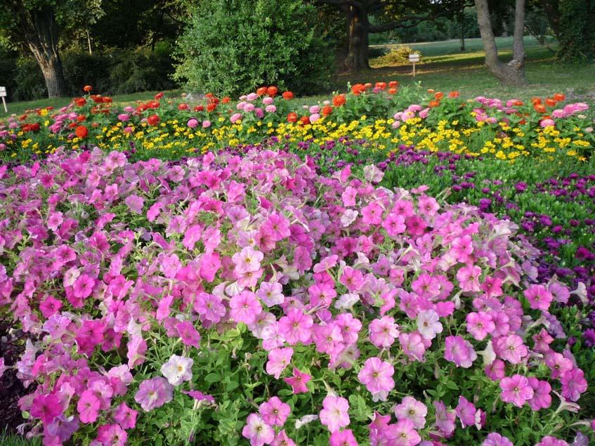 Egynyári virágok