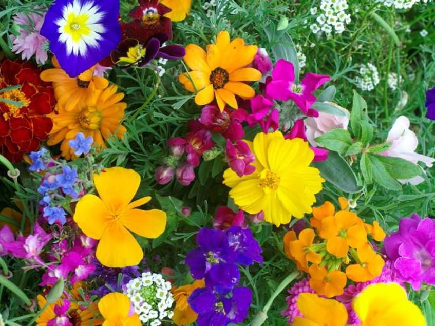 egynyári virágmontázs