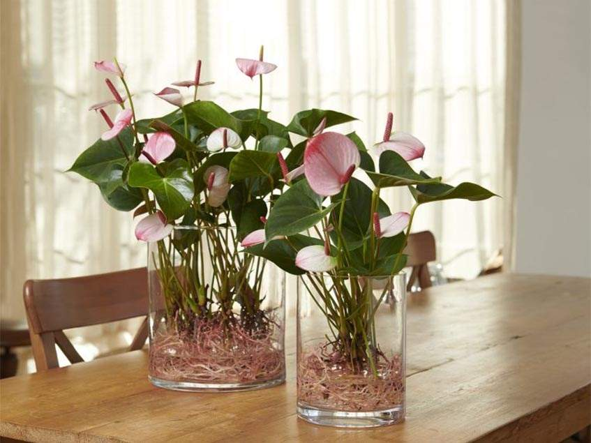 flamingóvirág üvegben