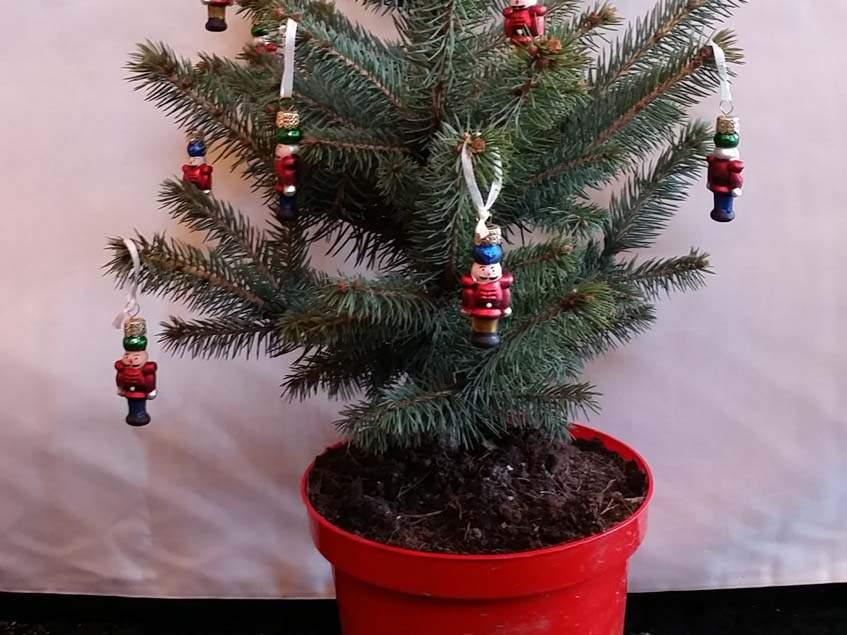 földlabdás karácsonyfa