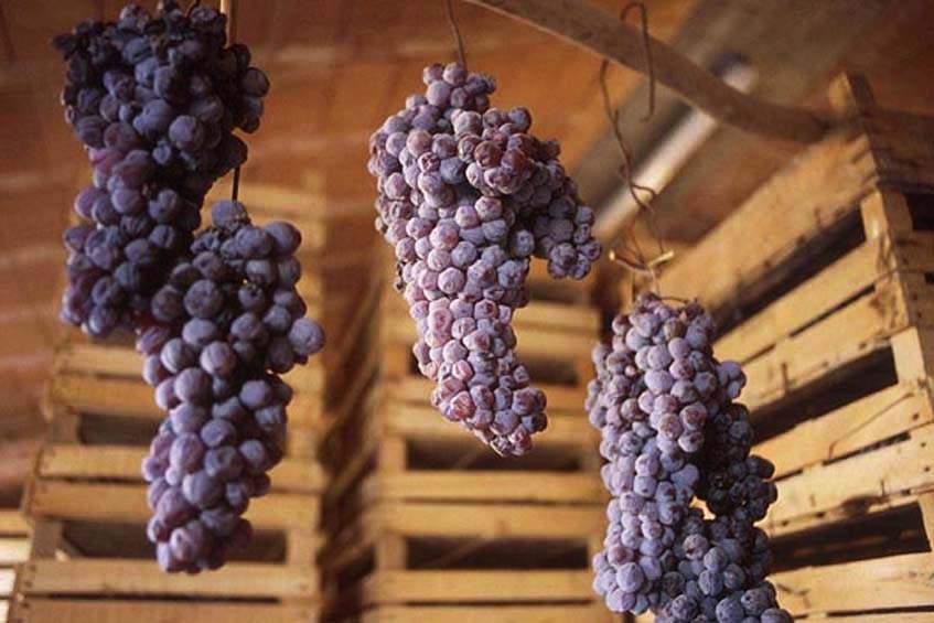 felfüggesztett szőlőfürtök