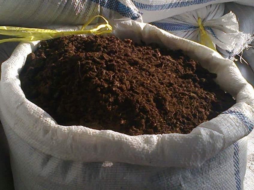 giliszta komposzt