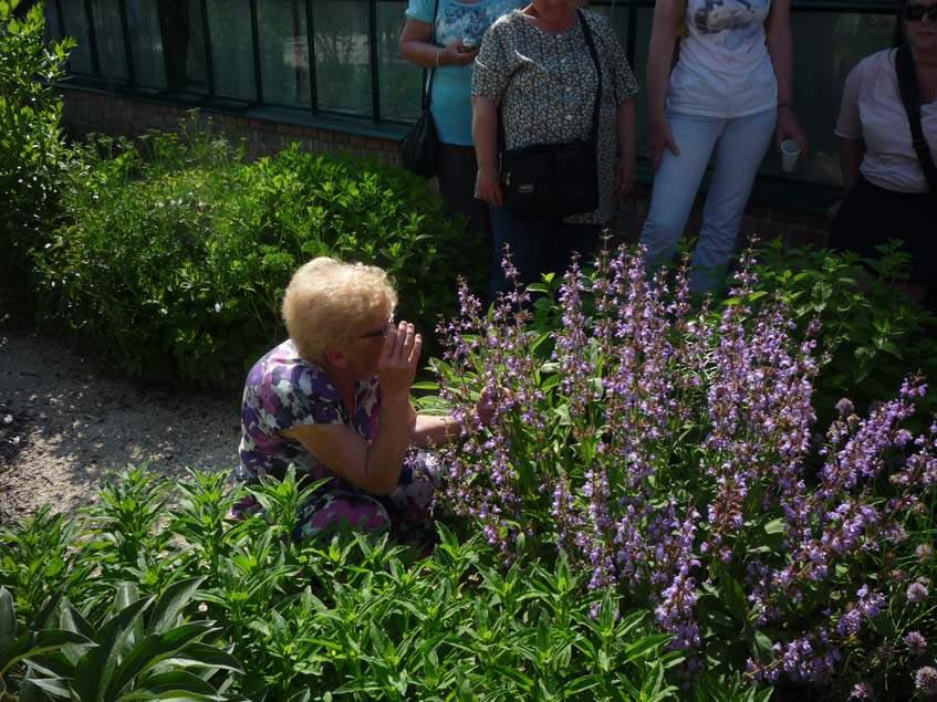 A gödöllői Pálmaház kertészetben