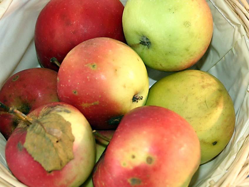 Jonatán almák kosárban