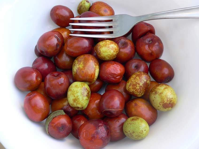 jujuba termése
