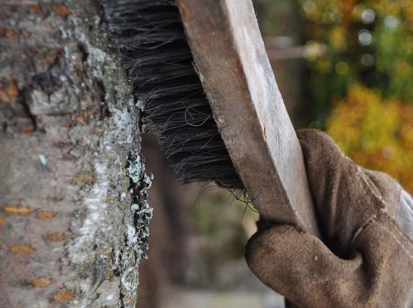 fa kártevők