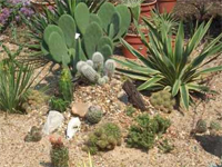 privát kaktuszkert