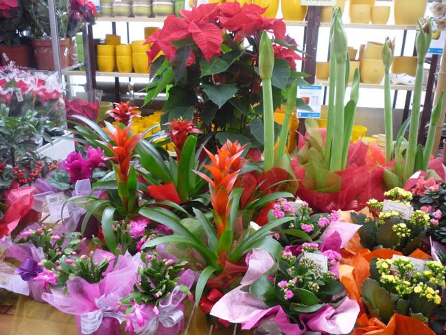 virágok karácsonyra