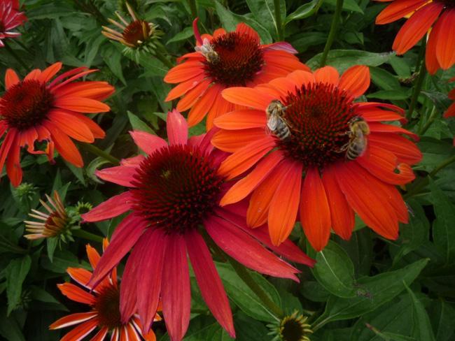 kerti kasvirágok