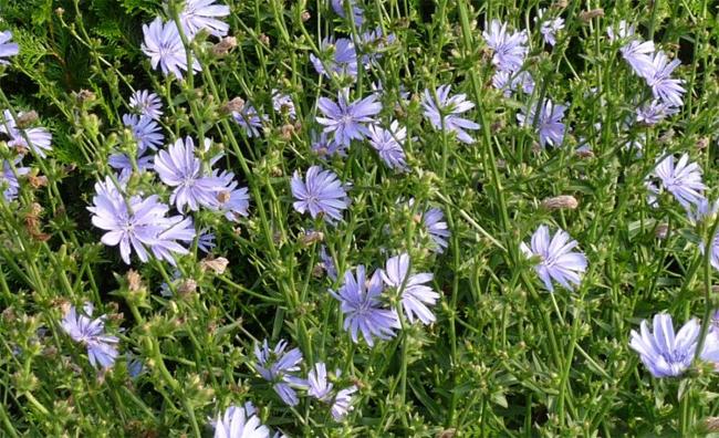 Gyomnövények - Kertlap Kertészeti Magazin & Kertészeti Tanfolyamok