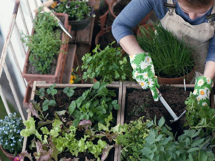 kertészkedés balkonon