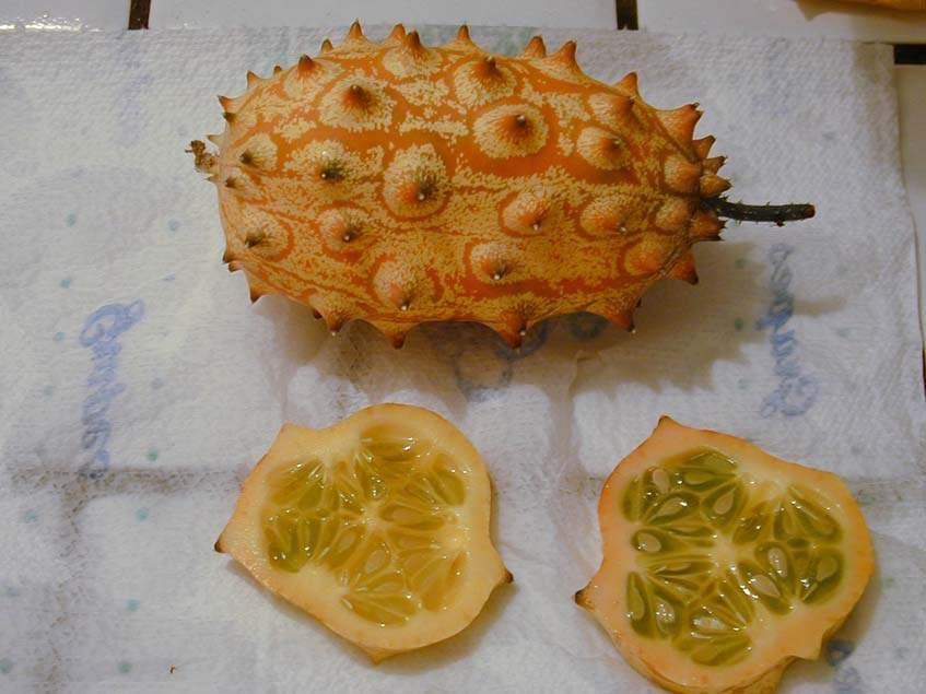 kiwano termés