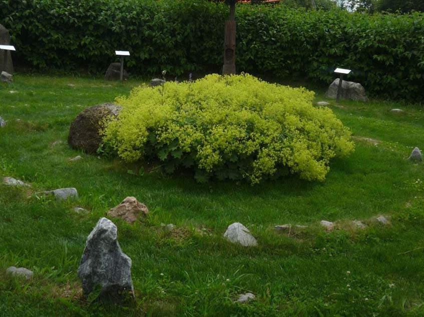 kő labirintus, Kittenberger kert