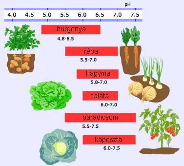 konyhakerti növények pH igenye