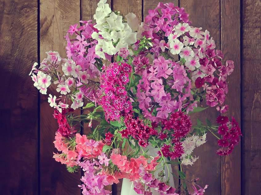 lángvirágok vázában