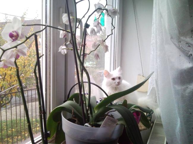 lepkeorchidea ablakban