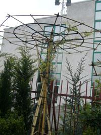 lilaakác ernyő