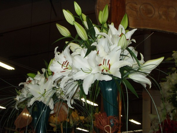 liliom vázában