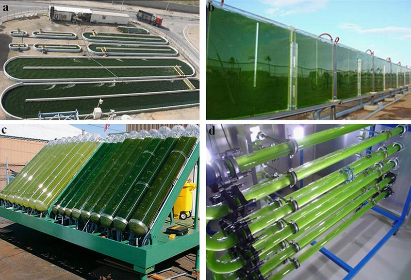mikroalga termesztés fotobio-reaktorokban