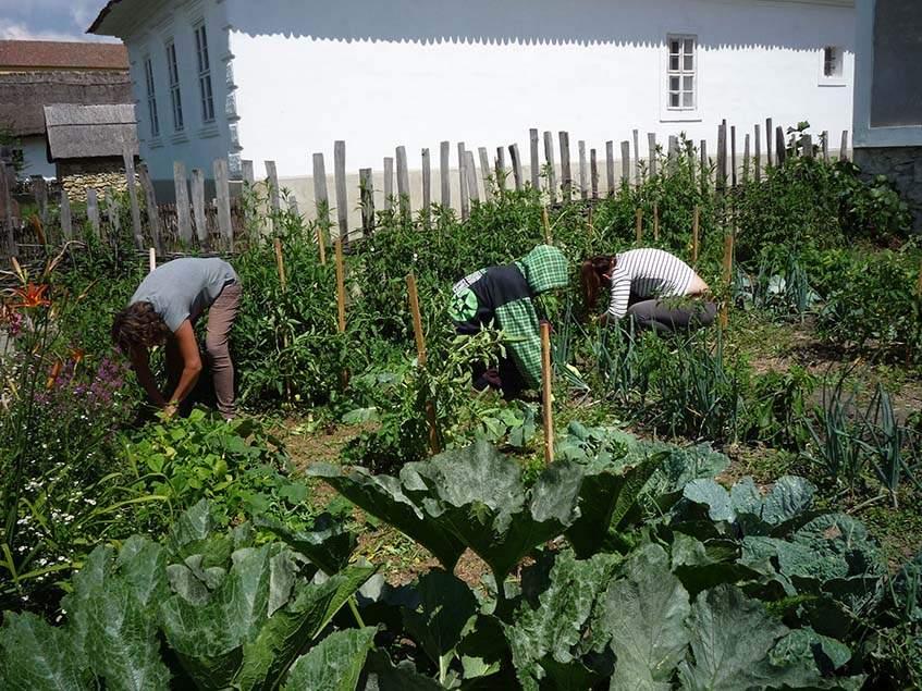 Y generáció kertészkedik