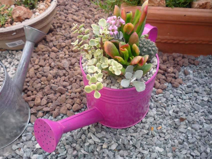 mini kaktuszkert öntözőkannában