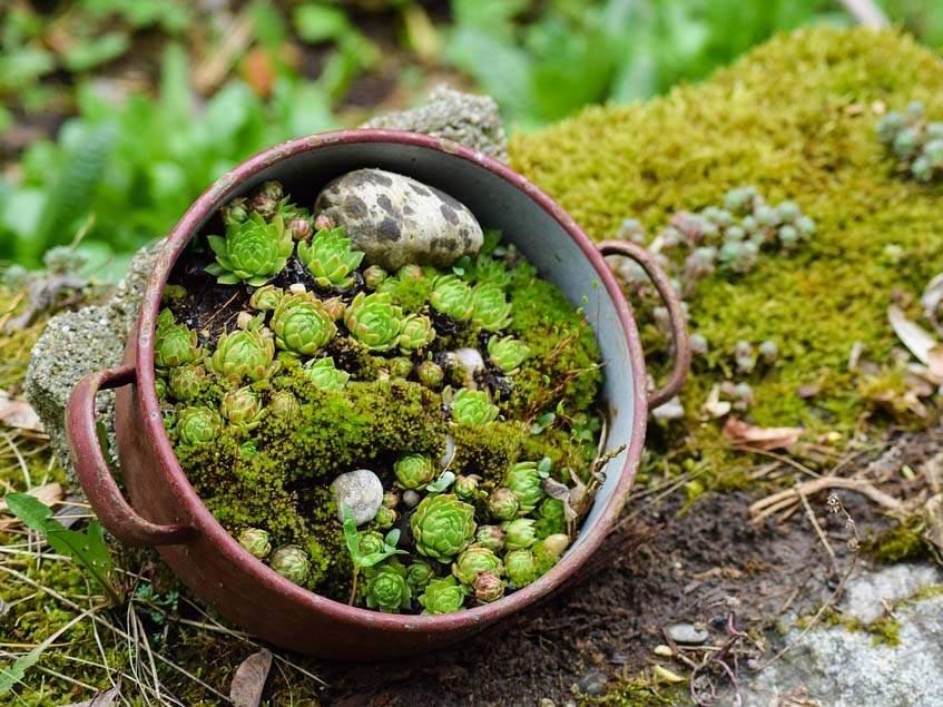 miniatűr sziklakert edényben