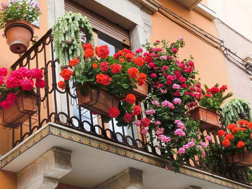 muskátlis balkon